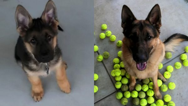 Girl Asks for Puppy Transformation Pictures, Wins the Internet