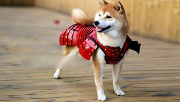 Samurai Armor for Dogs Is a Thing and It's Amazing