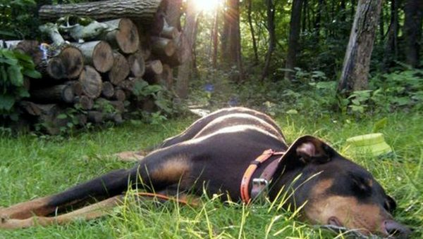 8 Dogs That Found the Perfect Sunbeam Are Your Nap Inspiration