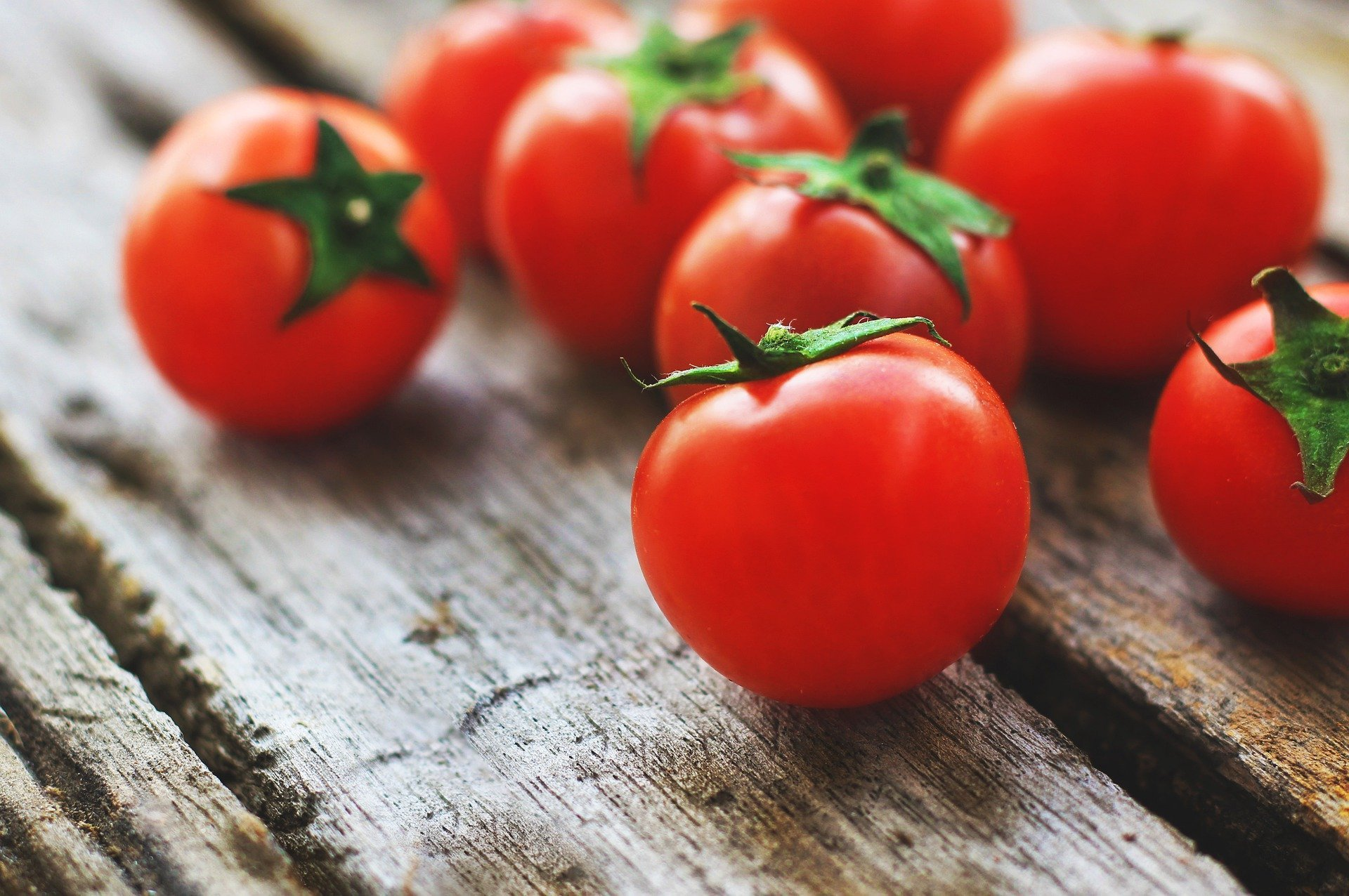 Can Dogs Eat Tomatoes? | Food Sharing