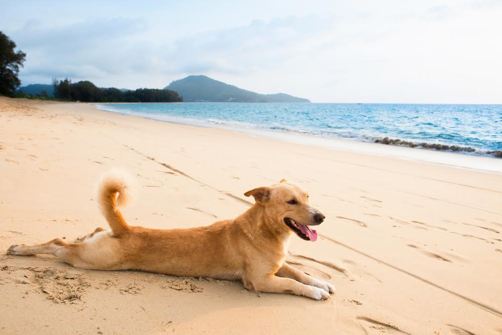 chien allongé sur la plage