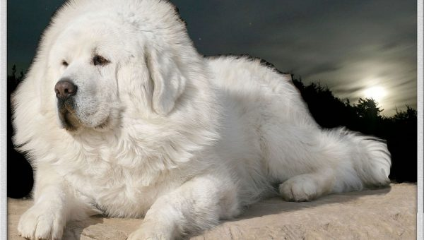 The Real Stories Behind the World's Most Expensive Dogs