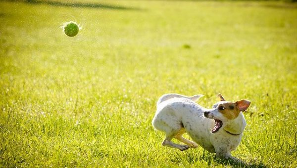 Top 7 Dog Parks in Long Island, NY