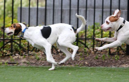 Top 6 Dog Parks in Cincinnati, OH