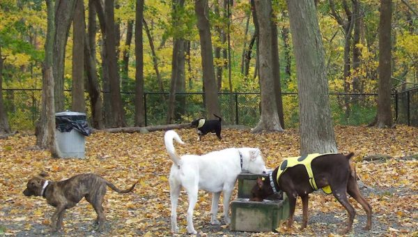 Top 8 Dog Parks in Connecticut