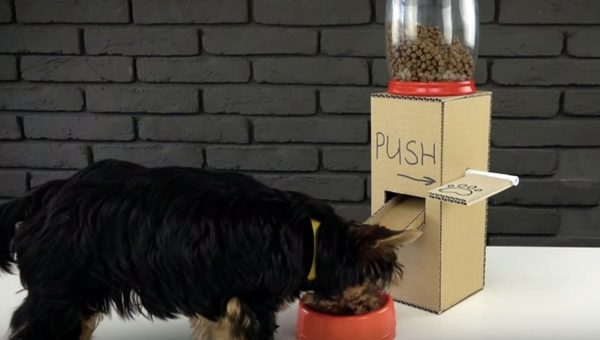 Five Million People (and Counting) Have Watched this DIY Dog Project Video