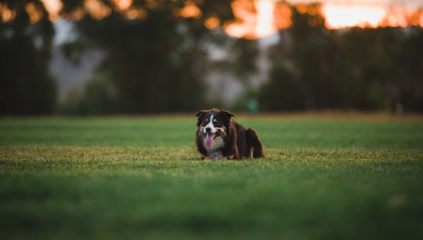 Top 9 Dog Parks in Utah