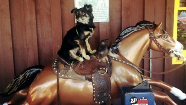 These Lucky Dogs Getting Pony Rides Are Loving Their New BFFs