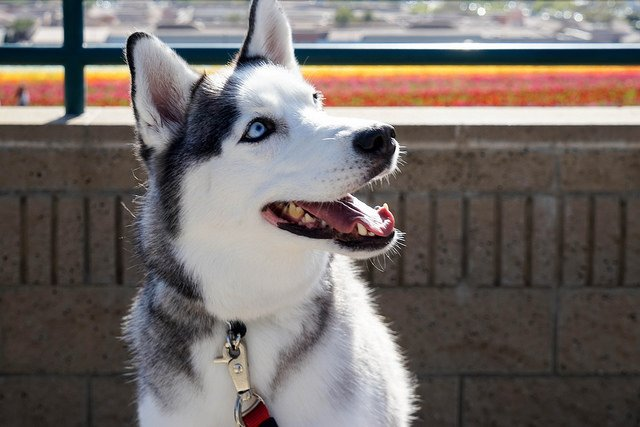 how do dogs learn their names the dog people by rover com