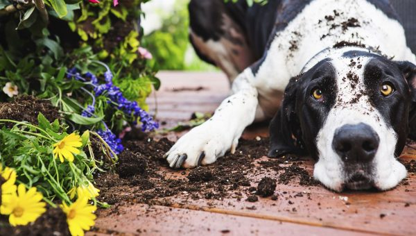 How To Grow a Dog-Friendly Container Garden