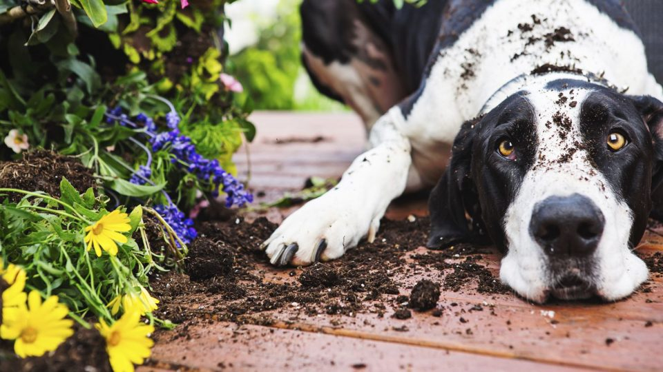 how to grow a dog friendly container garden the dog people by