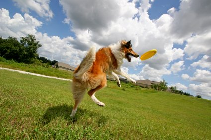 Top 7 Dog Parks in Madison, WI