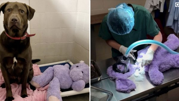 Dog and His Fuzzy Purple Hippo Must Be Adopted Together, Shelter Says