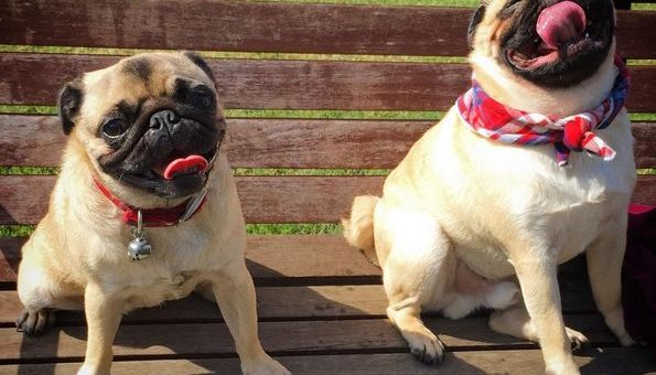 Top 6 Dog Parks in Nashville, TN