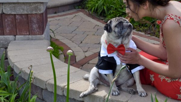 She Didn't Have a Prom Date, So Her Pug Stepped In