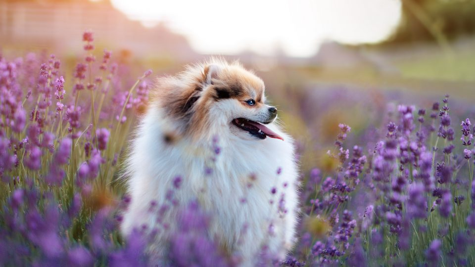 45 Gorgeous Flower Names for Dogs that Go Beyond Daisy and Lily