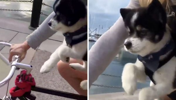 Video of Tiny Puppy 'Swimming' in the Air Goes Viral