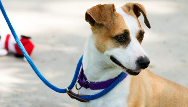 Los Angeles: We Dare You to Get Through This Post Without Adopting a Dog