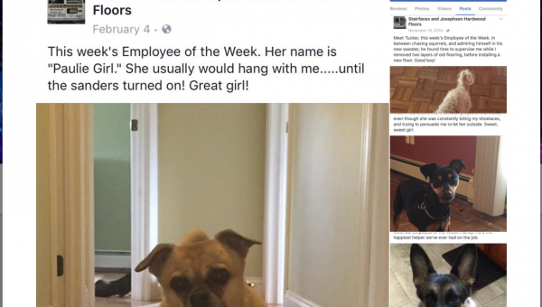 Dad Posts Photos of Customer Dogs as 'Employee of the Week' and Suddenly Goes Viral When Son Tweets about It