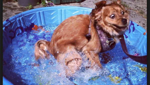 What to Do When Your Dog Hates the Water