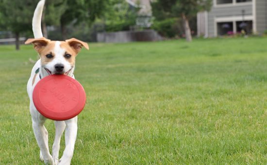 Top 6 Dog Parks in Boulder, CO