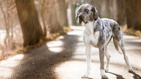 7 Things That Only Catahoula People Understand