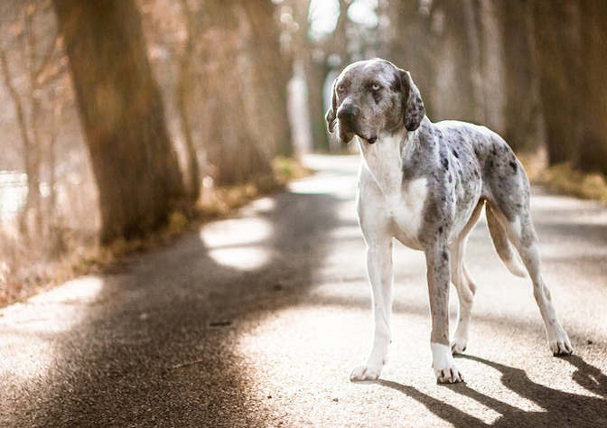 7 Things That Only Catahoula People Understand The Dog People By