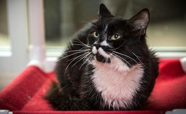 cat names rover tuxedo dog miller sarah