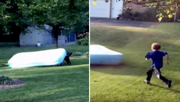 Labrador Runs Off with Inflatable Pool on His Head in Hilarious Video
