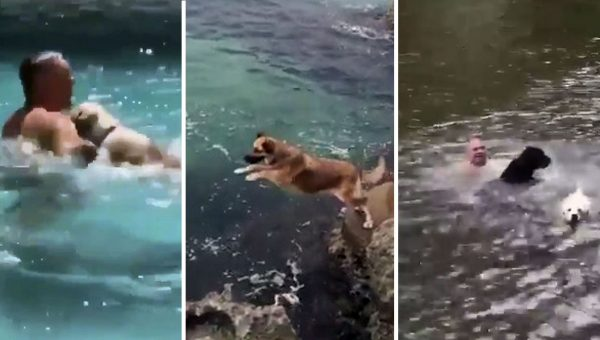 Hilarious Videos of Dogs 'Rescuing' Swimmers Prove That We Don't Deserve Dogs