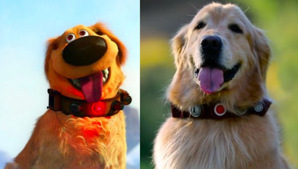 Real Life Talking Dug from Pixar's 'Up' Surprises Fans at Park [Video]