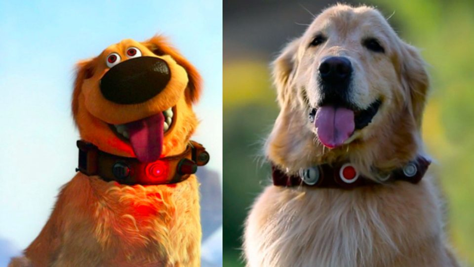 Real Life Talking Dug From Pixar S Up Surprises Fans At