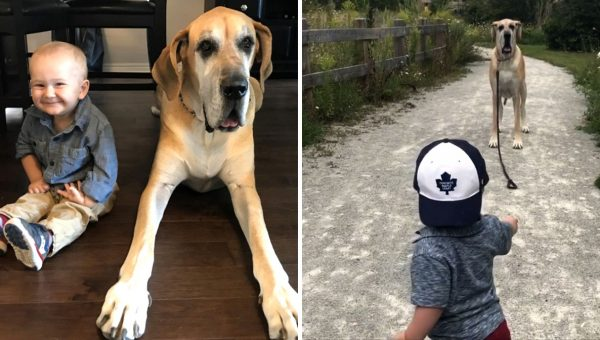 Huge Dog, Little Boy, Big Love