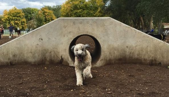 Top 7 Dog Parks in Salt Lake City