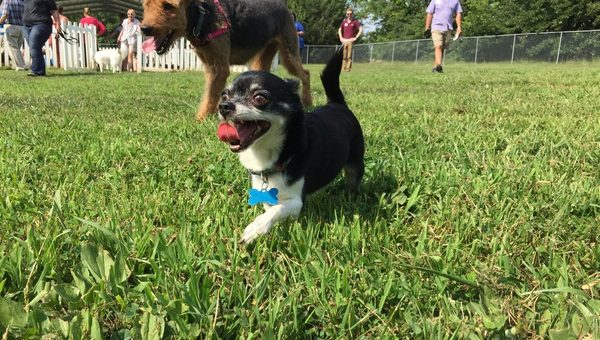 Top 7 Dog Parks in Kansas City