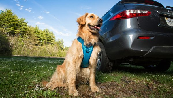 How to Overcome Your Dog's Car Travel Anxiety