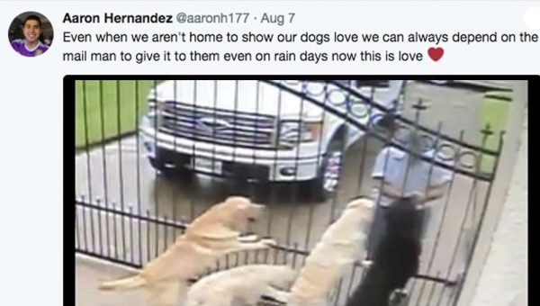 Mail Carrier Caught on Camera Petting Dogs Goes Viral