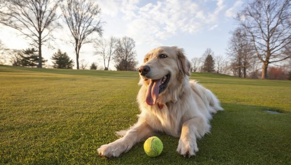 Top 8 Dog Parks in Maryland