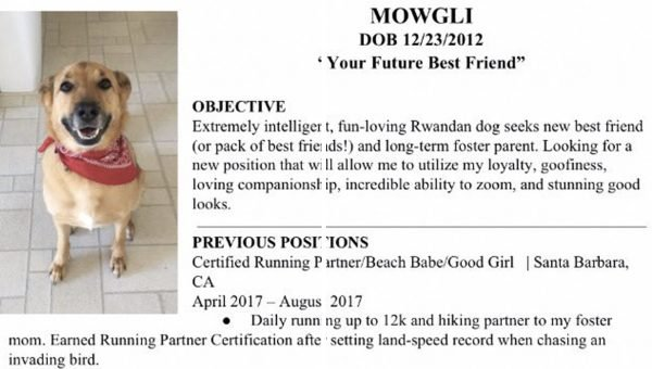 Friends Create Incredible Resume for Rescue Dog Seeking New Foster Family