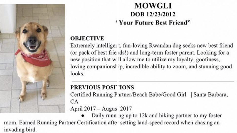 friends create incredible resume for rescue dog seeking