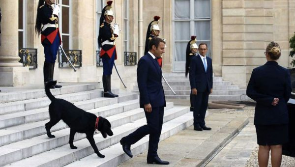 French President Macron Adopts Mixed Breed Rescue Named Nemo