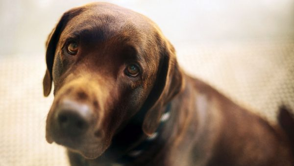 How to Prepare Your Dog Emotionally Before You Travel Without Them