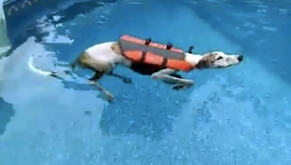 This Retired Greyhound Is Just Gonna Float Because Why Swim? [Video]