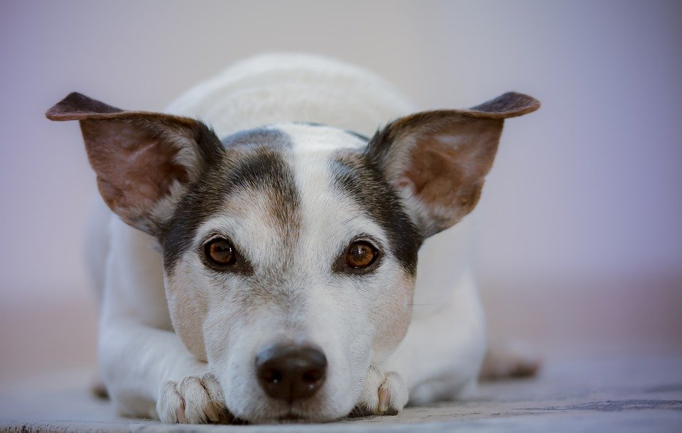 What spices are toxic to dogs? This dog laying on the floor wants to know.