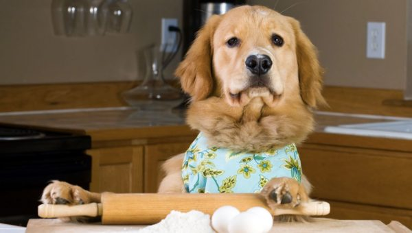 Family Convinces Picky Golden Retriever to Eat with Pretend Cooking [Video]