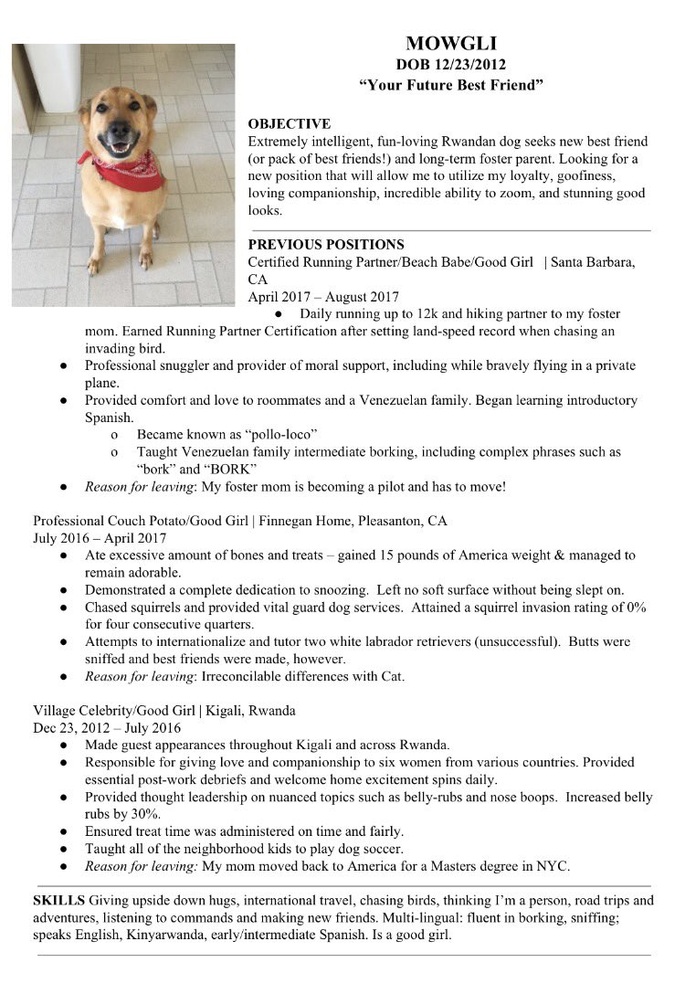 Friends Create Incredible Resume For Rescue Dog Seeking New Foster