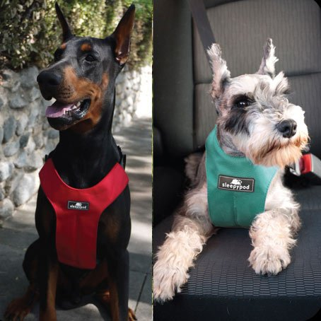 dog car safety showing two dogs wearing seatbelt harnesses