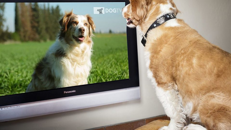Why Does My Dog Bark At The Tv The Dog People By Rover