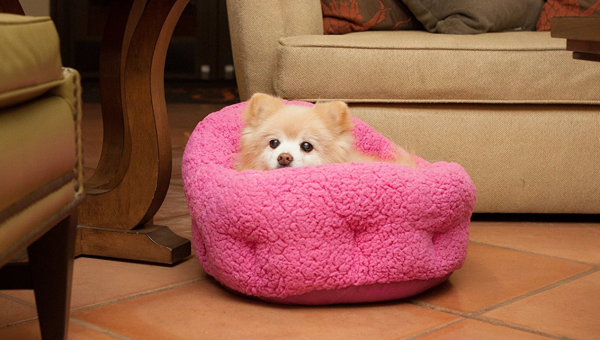 11 Dog Beds So Cozy, We'd Sleep In Them Too!
