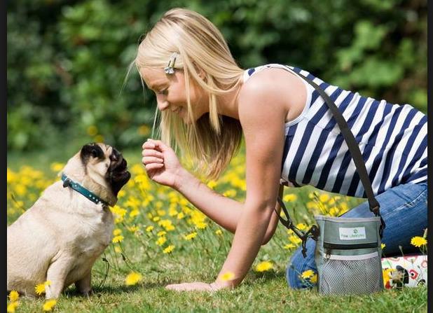 dog lover gift dog treat bag Dog Poop Bag Holder Dog Treat Holder GREEN PURPLE Dog Walking Waist bag DOG waste bag dispenser